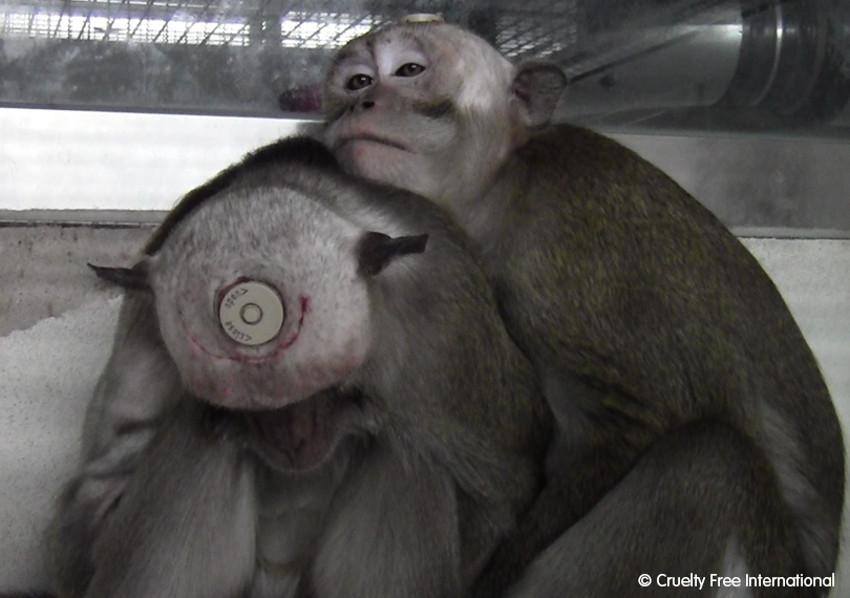 Zie het door hun ogen - dierproeven - apen